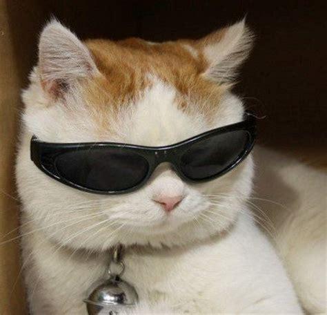 cat sunglasses | ruby von fleur | flickr