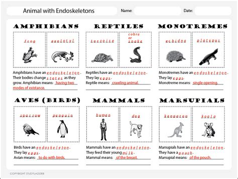 printable animal classification chart animal classification chart 1 answers science skills