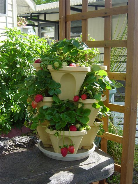Strawberry Garden Ideas Container Gardening Ideas Vegetables Decosee