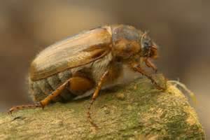 bett käfer de pumpink bett r 252 ckw 228 nde