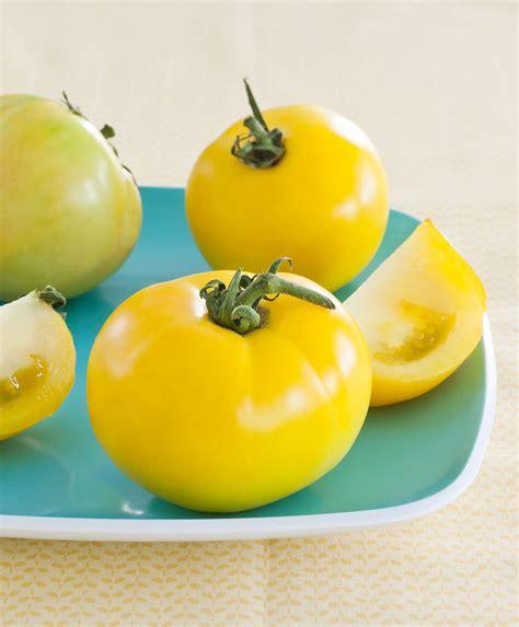 lemon boy yellow tomato eye catching color sweet flavor