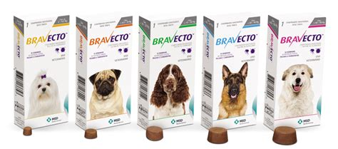 Bravecto Flea Medicine For Cats - cat rabbit flea fleas worm treatment spot on chewable