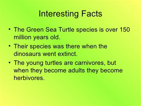 facts about green green sea turtle