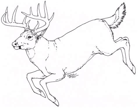 Galerry coloring pages whitetail deer