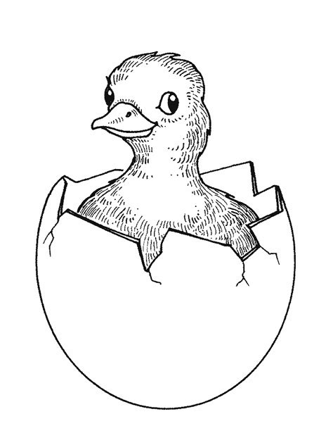 Kids Coloring Pages : Duck Coloring Pages