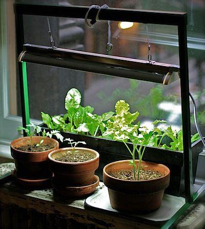 indoor indoor herbs  grow lights  pinterest