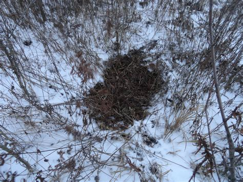how to tell how a buck is is that a buck or doe bed here s how to tell the