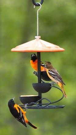wild birds unlimited: oriole baby food
