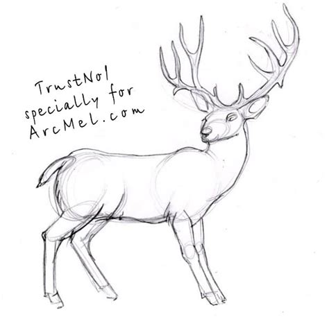 how to a deer sketches of deers step by step autos post