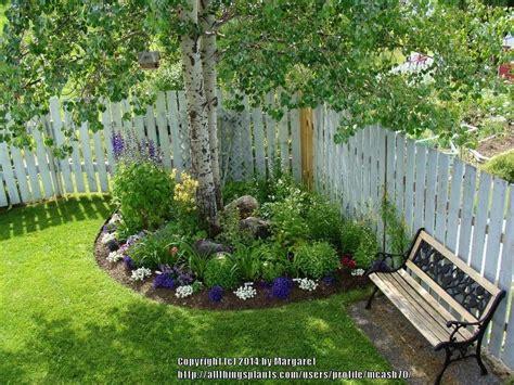 Green Thumb Garden Center by Shady Nooks Garden Org