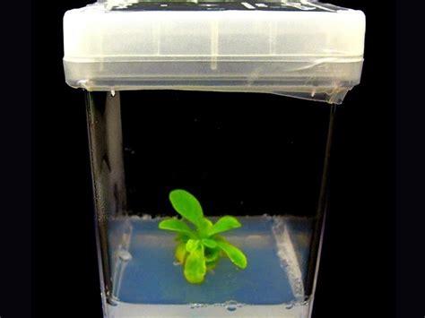 Lu Avatar Mini Led starlight avatar la primera planta bioluminiscente