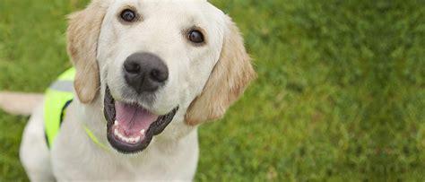 dogs for the disabled dogs for the disabled
