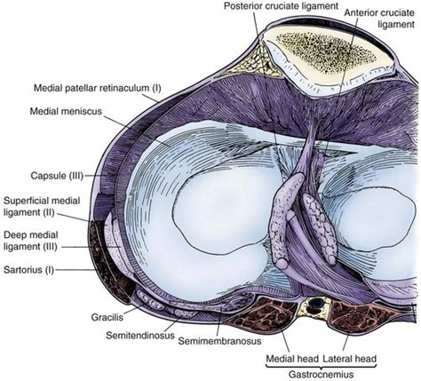 knee cross section medial ligamentous injuries of the knee acute and chronic