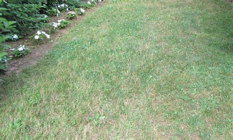 late summer lawn care 25 trending weeds in lawn ideas on pinterest weeds