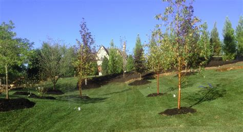 landscaping springfield mo landscaping gallery creation lawn and landscape