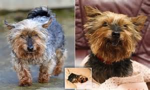 best diet for yorkies what are the best foods for terrier breeds picture