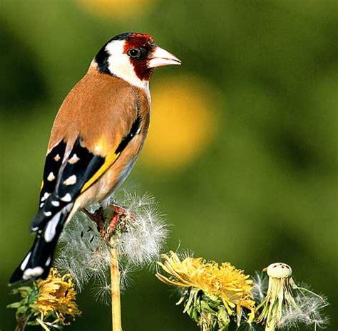 Garden Birds by Garden Birds Pictures Animal