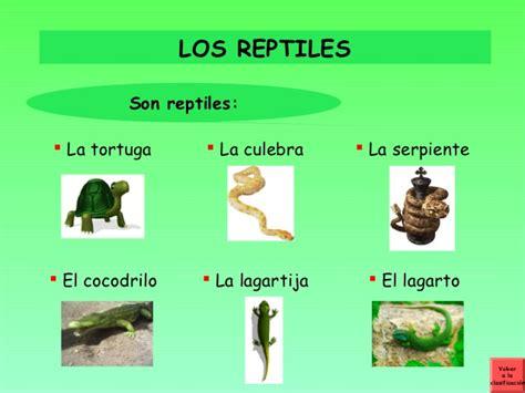 imagenes de animales vertebrados reptiles los animales vertebrados