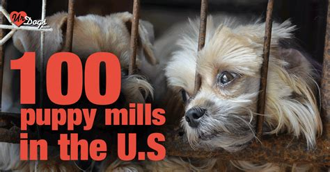 list of puppy mills in ohio the most horrible 100 puppy mills in the country exposed
