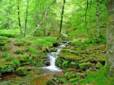por una gentil floresta tipos de vegetaci 243 n