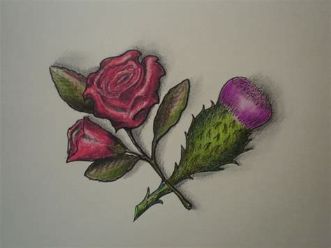 english rose tattoo designs and scottish thistle entwined tattoos