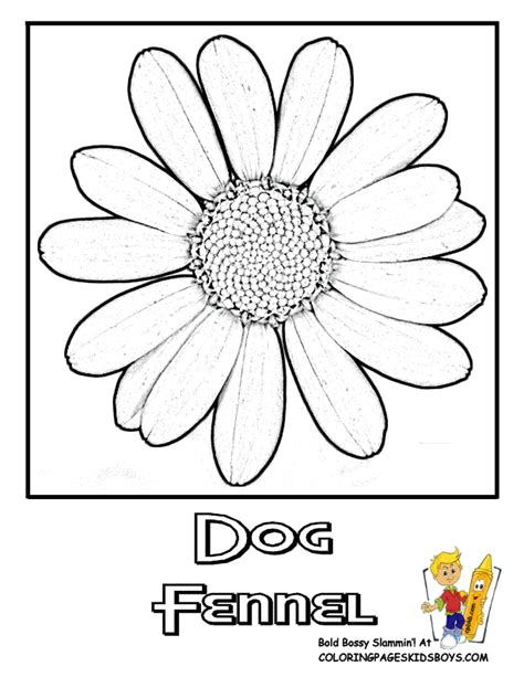 coloring pages of dogwood flowers free coloring pages of dogwood flower