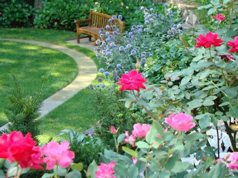 Knockout Roses Landscape Ideas Knock Out Roses Still The Best
