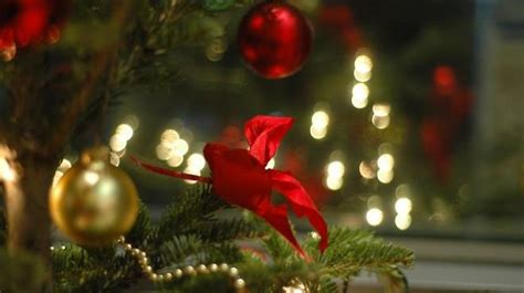 buy real christmas trees for delivery in london the where to buy christmas trees in london how to get a