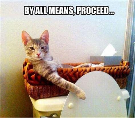 where do newborn kittens go to the bathroom funny cat in the bathroom dump a day