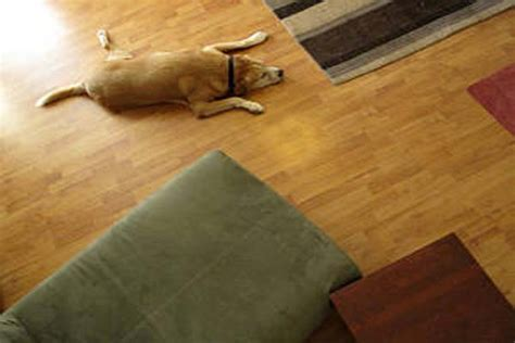 flooring best flooring for dogs types of hardwood floors