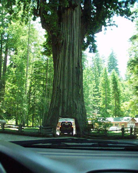 car with tree image leggett kalifornien
