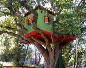 magic tree house in the middle of a fir forest and few
