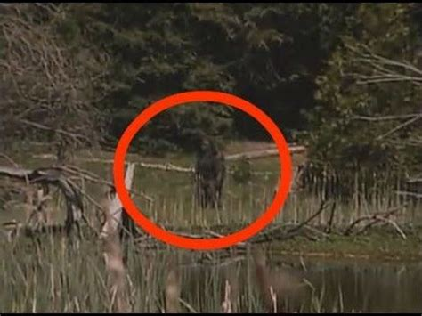 16 best images about bigfoot on pinterest | foxs news