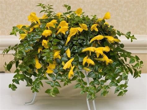 easy flowers to grow indoors easy flowers to grow indoors a useful guide for indoor