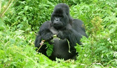 imagenes animales en im 225 genes de animales en peligro de extinci 243 n