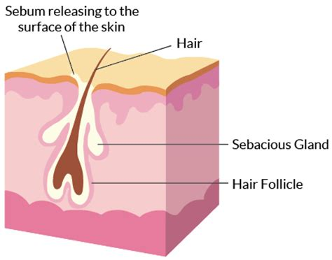 how to strengthen hair follicles in females over 40 about acne yoderm