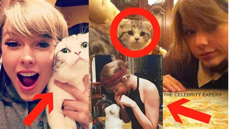 taylor swift cat video taylor swift funny cat videos all cat lovers must watch