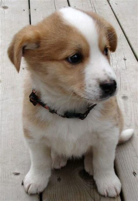 mixed breed puppies so mixed breed puppy dogs