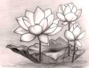 Lotus Pencil Sketch 40 Beautiful Flower Drawings And Realistic Color Pencil