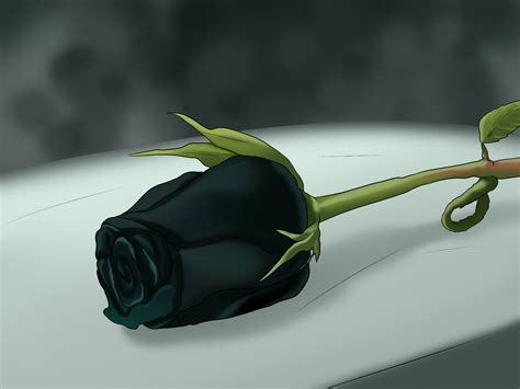 Beautiful Black Roses HD Wallpapers ? Flowers HD Pictures