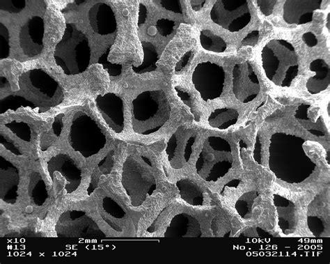 scanning electron microscope st lawrence university geology