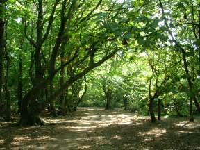 Woodland Tree - the woodland friends of lancing ring