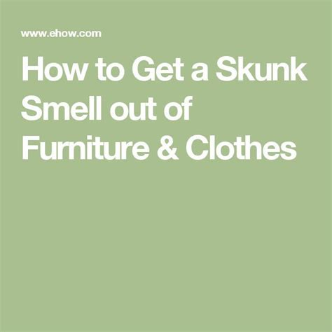 how to get skunk smell out of 1000 ideas about skunk smell on skunk smell remover skunks and skunk