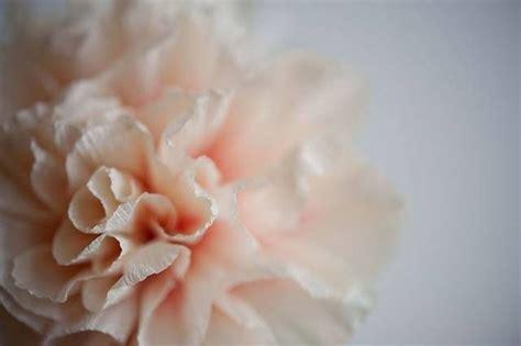 fiori di carta con tovaglioli fiori con tovaglioli di carta fiori di carta
