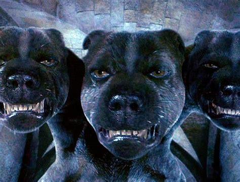 harry potter dog funny animals 3 headed harry potter dogs