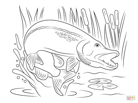 jumping fish coloring pages northern pike jump out of water coloring page free