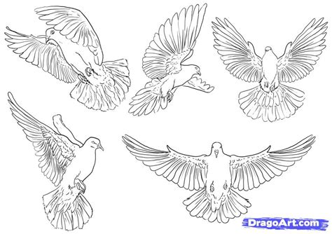 doodle how to make pigeon how to draw pigeons step by step birds animals free
