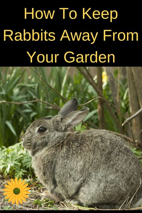 How To Keep Rabbits Out Of Your Backyard by How To Keep Rabbits Away From The Garden Backyard Garden