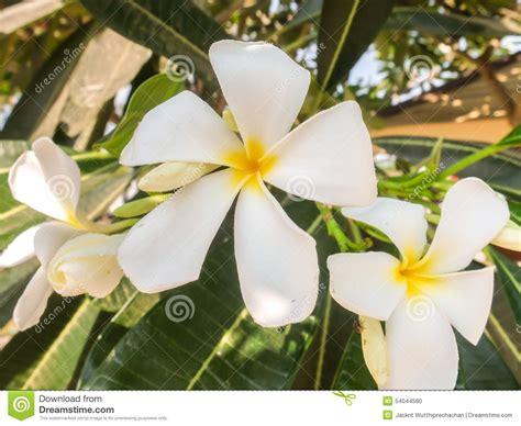 tipi di fiori bianchi fiori bianchi ombra gpsreviewspot