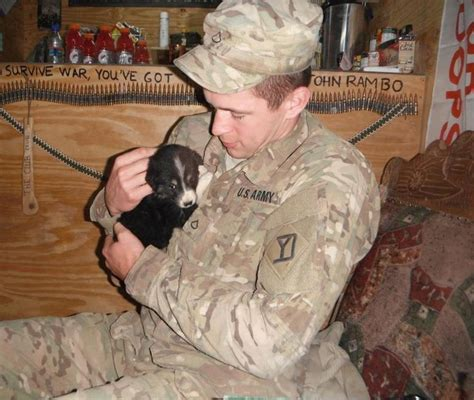 trained psychiatric service dogs for sale 160 best images about heroes service dogs on service